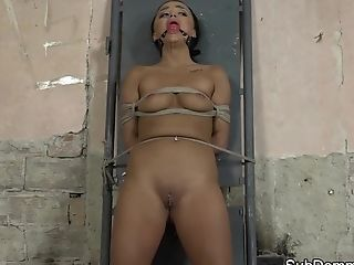 Bondage & Discipline Stunner Lashed And Toyed While Ball-gagged
